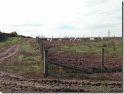 Free_Range_Pig_Farm wikipedia commons